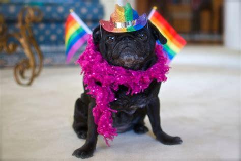 rainbow pug rainbow lola pug