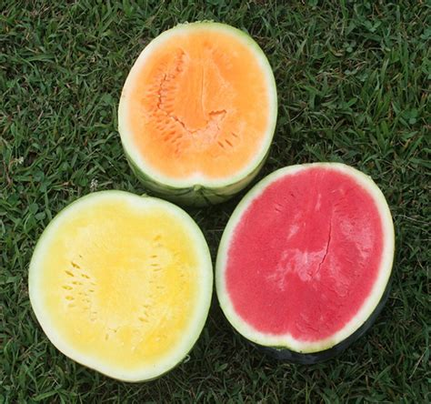 what color is watermelon watermelon center for crop diversification