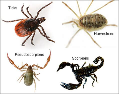 species of arachnida and myriopoda scorpions spiders mites ticks and centipedes injurious to classic reprint books science year 3 three invertebrate animal groups