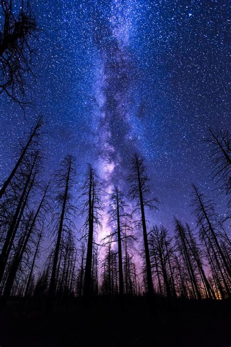 mobile hd wallpapers night sky start forest milkyway
