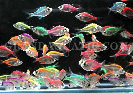 ornamental fish glass fish id 4589547 product details view ornamental fish glass fish