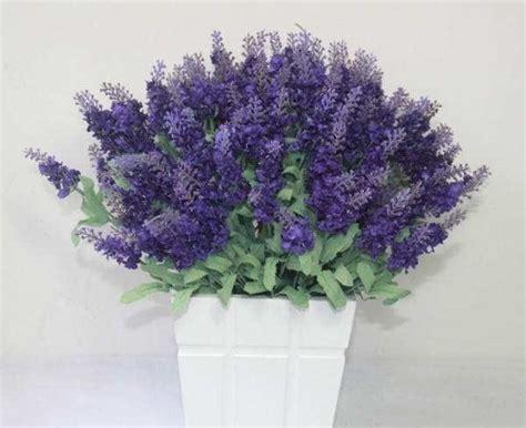 Pupuk Untuk Bunga Lavender cara menanam bunga lavender tanaman hias bunga buah dan
