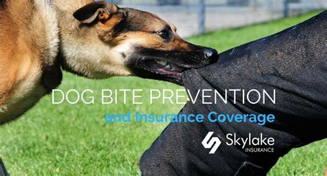 house dog bite dog bite prevention and insurance coverage skylake insurance