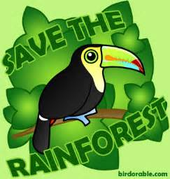 Plants And Animals Found In Tropical Rainforests - save the rainforests getintothegreenscene
