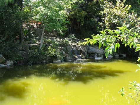 Morikami Gardens by Panoramio Photo Of Morikami Japanese Gardens