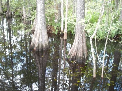 trees archives wetlands in florida