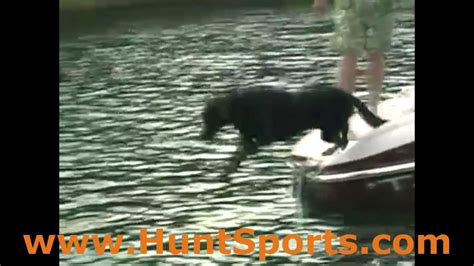 boat dog r duck hunting best duck dog gear water dogs quot loadapup quot boat doggie