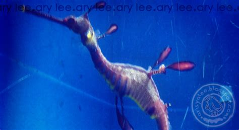 Tiket Underwater World Pattaya Thailand Dewasa percutian di langkawi underwater world ary lee