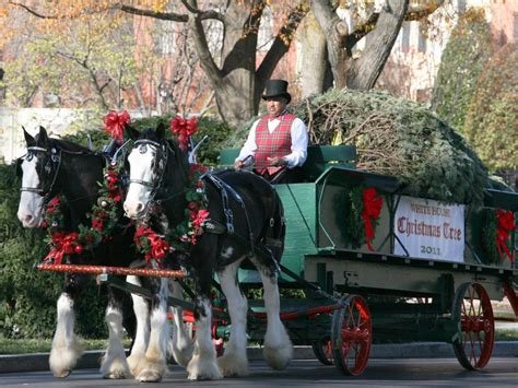 christmas decorating with horses delightful image of decorative carriage decoration as accessories for