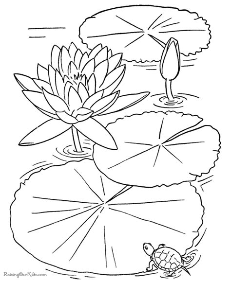 printable flower coloring book page june bugs