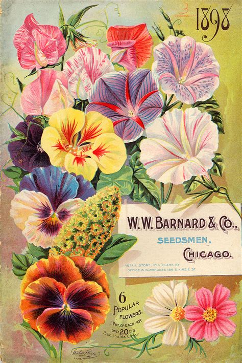 Garden Plants Catalogs by Catalog For Seeds For Summer Flowers 1898 Matthew S
