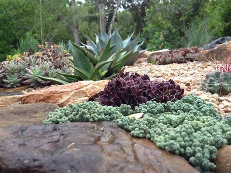 giardini e piante giardini piante grasse piante grasse piante grasse da