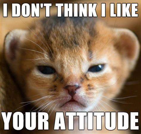 Little Meme - little cat meme funny pictures quotes memes jokes