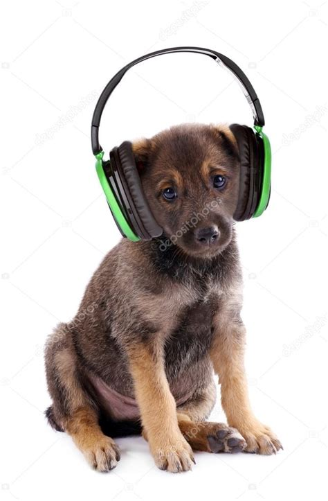 puppy with headphones puppy with headphones www pixshark images galleries with a bite