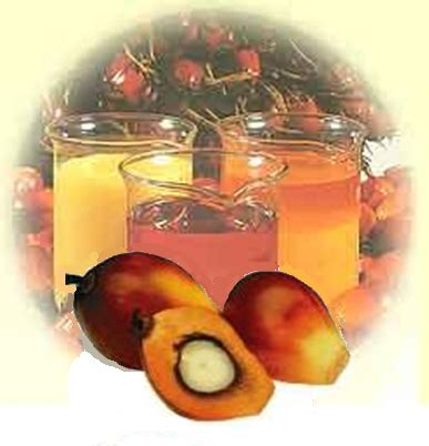 Minyak Cpo Kelapa Sawit the palm planters mophologi kelapa sawit