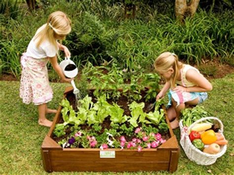 box vegetable garden vegetable garden box just for