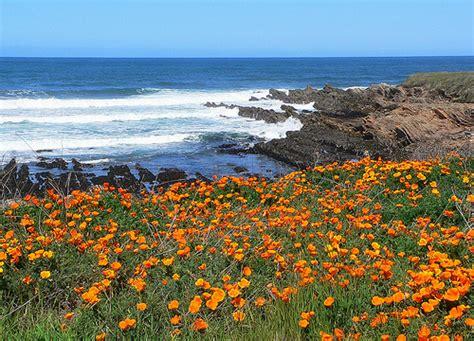 Green Thumb Garden Center by Flower Shows In California Proflowers Blog