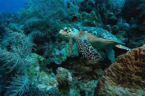 epic dive boats turtle chillin picture of epic divers grand cayman
