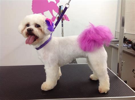 poodle cuts exles creative dog grooming creative grooming
