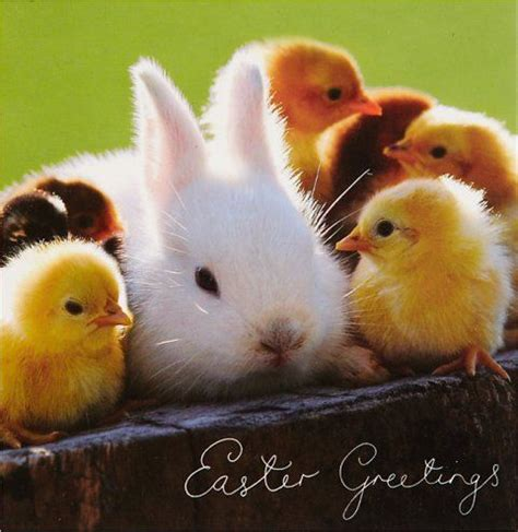 cute rabbits and chicks cute adorable easter bunny chicks cute animals