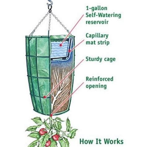 #16 DIY Growing Tomatoes: How to Grow Tomatoes Upside Down