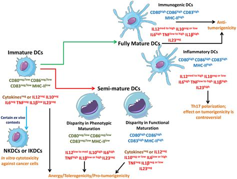 frontiers tumor altered dendritic cell frontiers immature semi and fully