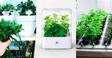 hydroponics herb garden kits  grow indoor