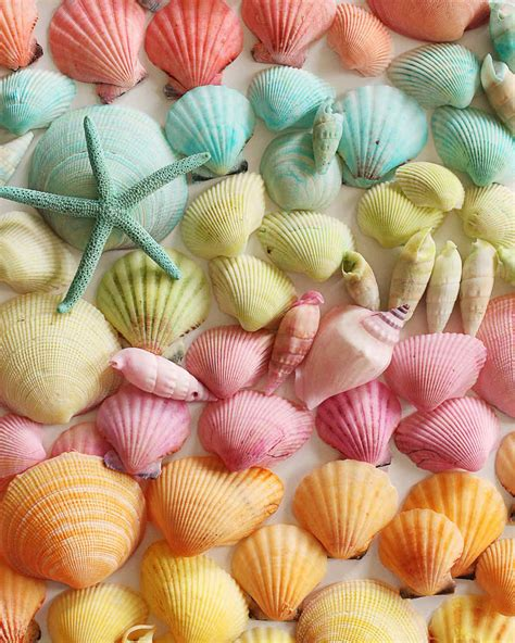 dyed seashells martha stewart