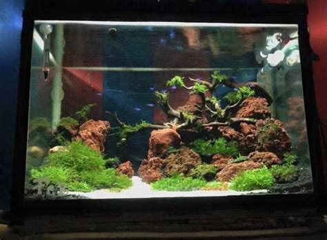 Jenis Dan Macbook Air jenis tanaman air penghias aquascape dan aquarium binatang peliharaan
