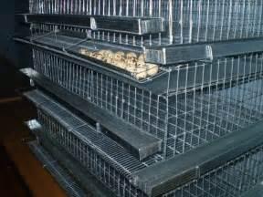 epic quailblog housing for quail