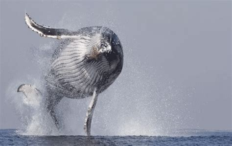 wale gif whale gif find share on giphy