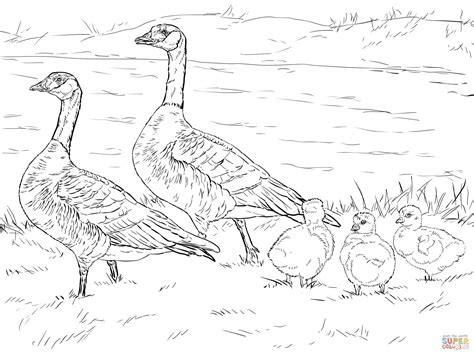 nene bird coloring page baby goose coloring page az coloring pages