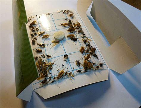 come uccidere le formiche volanti trituratori insetti e feedback sulla loro applicazione