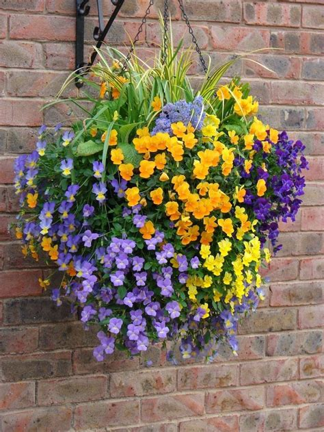 Colorful Hanging Planters by 440 Best Images About Hanging Baskets On