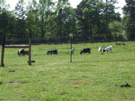 Photo Gallery Southern Comfort Farm Rabbitry