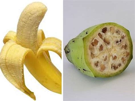 fruit 100 years ago these 7 fruits and vegetables look nothing like they used