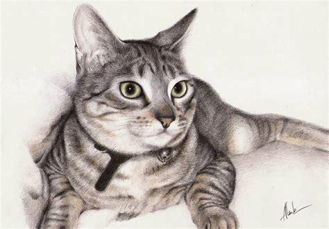 dibujos muy realistas dibujos de gatos y perros a lapiz