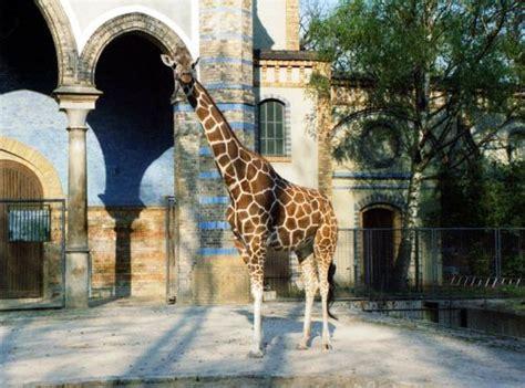 berliner zoologischer garten zoologischer garten berlin berlin tracesofwar
