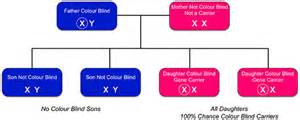what percentage of are color blind inherited colour vision deficiency colour blind awareness