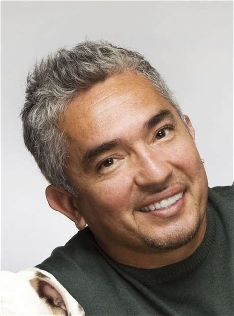 whisperer with cesar millan whisperer cesar millan faces probe animal cruelty allegations toledo blade