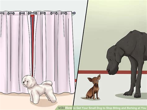 how to small not to bark how to get your small to stop biting and barking at you