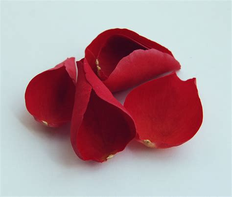 petals for valentines day the confetti petals for st s day