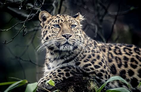 Imagenes De Jaguar Hd   jaguar full hd wallpaper and background image 2048x1333