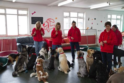puppy academy academy for dogs