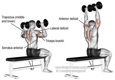 seated dumbbell bench press seated dumbbell overhead press guide and video weight