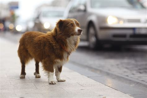 stray dogs tips category animal behavior college