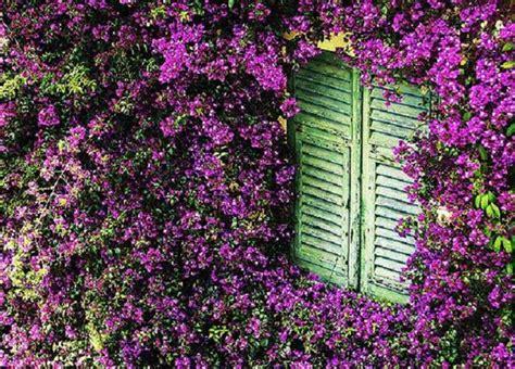 pianta sempreverde con fiori piante ricanti come sceglierle idee green