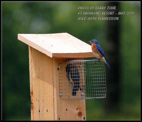 bluebird house with predator guard myideasbedroom com