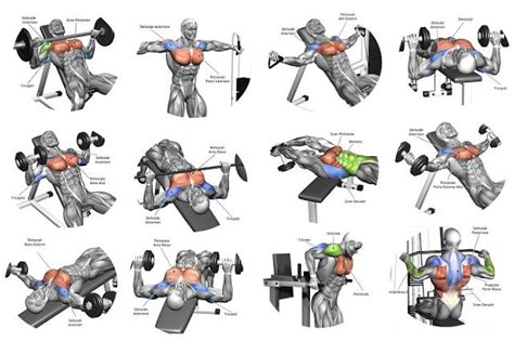 good bench workouts i think it would be fair to say that a well developed muscular chest is longed for by