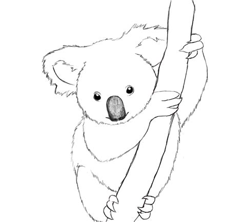 realistic koala coloring pages free printable koala coloring pages for kids animal place